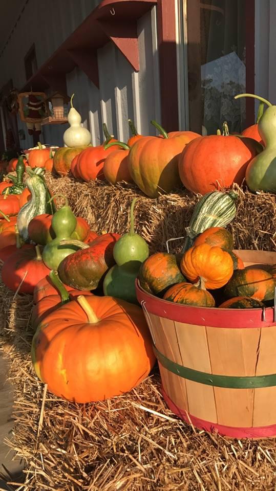pumpkin17