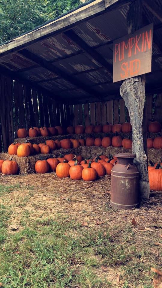 pumpkinpatch2019