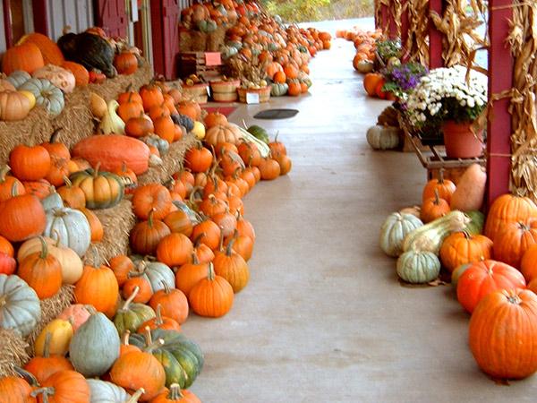 Ranalli Farms pumpkin patch